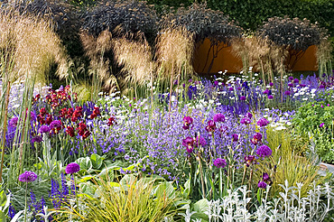 Allium, bearded iris, euphorbia, and nepeta plants in the award-winning Daily Telegraph Garden, designed by Tom Stuart-Smith, at the 2006 Royal Horticultural Society Chelsea Flower Show, London, England, United Kingdom, Europe