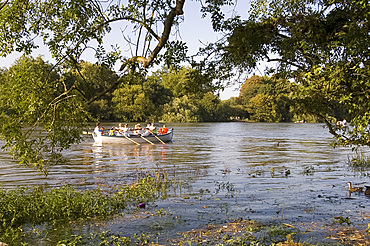Rowers in a wooden boat on the River Thames near Richmond-upon-Thames during a very high tide, Surrey, England, United Kingdom, Europe