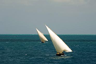 Cargo dhows sailing toward Stone Town harbour, Zanzibar, Tanzania, East Africa, Africa