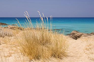 Beach grass growing in sand dunes along the beach at Phalassarna (Falassarna) on the western coast of Crete, Greek Islands, Greece, Europe
