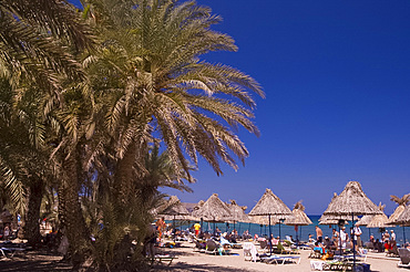A view of the palm fringed beach at Vai in Eastern Crete, Greek Islands, Greece, Europe