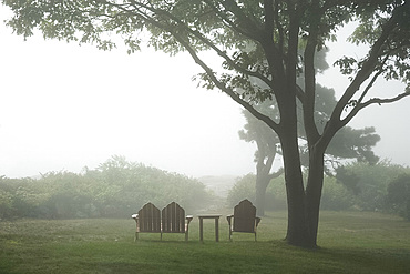 A foggy morning on Muscle Point near Gloucester, Massachussetts, New England, United States of America, North America