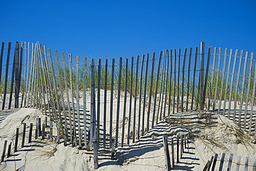 Sand dunes and beach grass, East Hampton Beach, Long Island, New York State, United States of America, North America