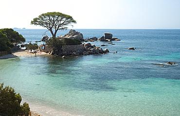 Palombaggia Beach near Porto-Vecchio, Corsica, France, Mediterranean, Europe