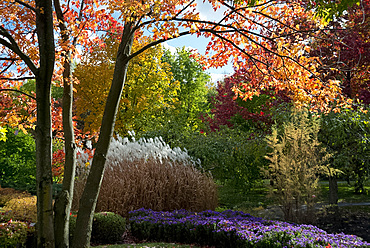 Autumn foliage in The Montreal Botanical Garden, Montreal, Quebec Province, Canada, North America