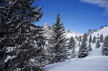 Sassongher Mountain seen through snow covered trees at the Alta Badia ski resort near Corvara, Dolomites, South Tyrol, Italy, Europe