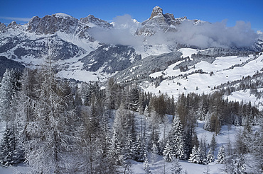 A view over snow covered pine trees to Sassongher Mountain from Alta Badia ski resort in the Dolomites, South Tyrol, Italy, Europe