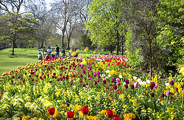 People enjoying a spring day in St. James's Park surrounded by brightly coloured tulips, London, England, United Kingdom, Europe