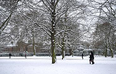 Snow covered trees next to Kensington Palace in Kensington Gardens, London, England, United Kingdom, Europe
