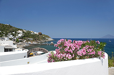 Pink mimosa on a terrace and white washed walls in San Pietro on Panarea, the Aeolian Islands, UNESCO World Heritage Site, Messina Province, off Sicily, Italy, Mediterranean, Europe