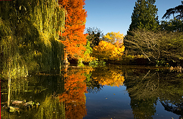 Reflections of autumn foliage in the Bog Garden at the Cambridge Botanic Garden, Cambridge, Cambridgeshire, England, United Kingdom, Europe