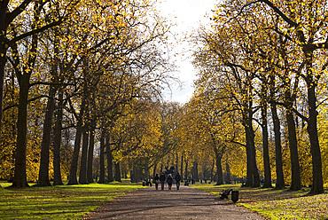 Colourful autumn foliage in Hyde Park, London, England, United Kingdom, Europe