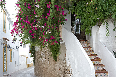 Bougainvillea growing around tiled steps in Ibiza Old Town, Ibiza, Balearic Islands, Spain, Europe