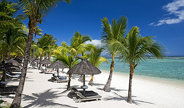 Palm trees and a white sand beach near the Lux le Morne Hotel, on the Le Morne Peninsula, Mauritius, Indian Ocean, Africa