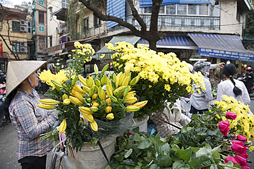 A woman selling yellow chrysanthemums and lilies for the Tet holiday in the Old Quarter, Hanoi, Vietnam, Indochina, Southeast Asia, Asia