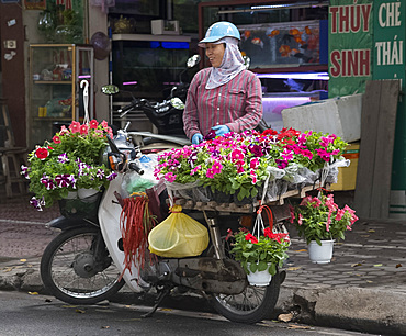 A woman selling pots of petunias from a bicycle in Hoang Hoa Tham Street in Hanoi, Vietnam, Indochina, Southeast Asia, Asia