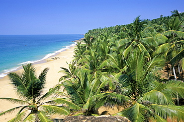 Beach and coconut palms, Kovalam Beach, Kerala state, India, Asia