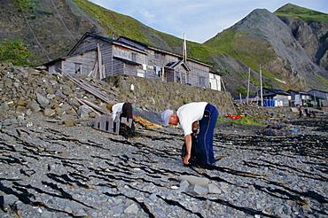 Seaweed farming, Rebun Island, Hokkaido, Japan, Asia