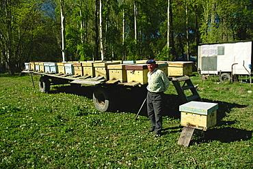 Beekeeping in the Kara Kol Valley, Kirghizstan, Central Asia, Asia