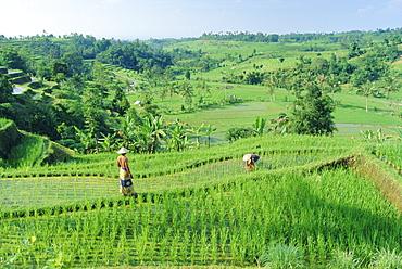 Rice terraces near Jatiluwih, Bali, Indonesia