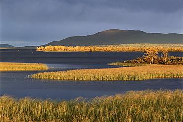 Autumn colours, Laponia, UNESCO World Heritage Site, Lappland, Sweden, Scandinavia, Europe