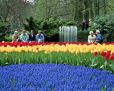 Tulips, Keukenhof, Holland, Europe
