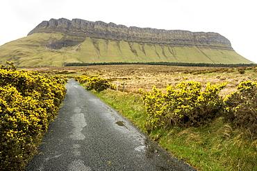 Benbulben, Dartry Mnts, County Sligo, Connacht, Republic of Ireland, Europe