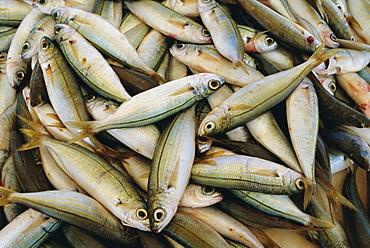 Close up of fish in market, Mykonos, Cyclades Islands, Greece, Europe