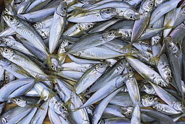 Fish in fish market, Istanbul, Turkey, Europe