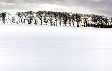 Row of trees in silhouette on edge of snow-covered field, Rock, near Alnwick, Northumberland, England, United Kingdom, Europe