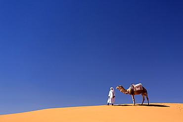 Berber man with camel on the ridge of an orange sand dune in the Erg Chebbi sand sea, Sahara Desert near Merzouga, Morocco, North Africa, Africa