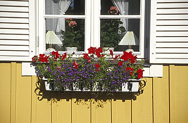 Window box, traditional house, Borgholm, Oland, Sweden *** Local Caption ***