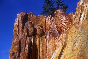 Tree sculpture, Grouse Mountain, Vancouver, British Columbia, Canada *** Local Caption ***