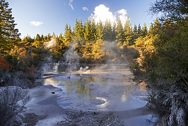 A thermal mud pool bubbles near to Wai-o-tapu Thermal Wonderland, Rotorua, North Island, New Zealand, Pacific