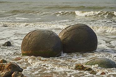 Moeraki Boulders, a group of very large spherical boulders on Koekohe Beach near Moeraki on the coast of Otago, South Island, New Zealand, Pacific