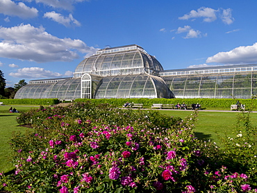 Palm House in Kew Gardens in summer, Royal Botanic Gardens, UNESCO World Heritage Site, Kew, Greater London, England, United Kingdom, Europe