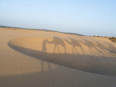 Essaouira beach camel shadows, Morocco, North Africa, Africa