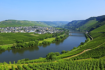 Vineyards near Trittenheim, Moselle Valley, Rhineland-Palatinate, Germany, Europe
