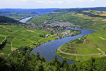 Moselle Valley near Mehring, Rhineland-Palatinate, Germany, Europe