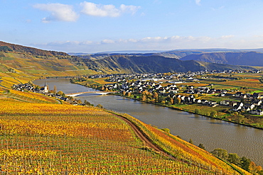 Vineyards near Piesport, Moselle Valley, Rhineland-Palatinate, Germany, Europe