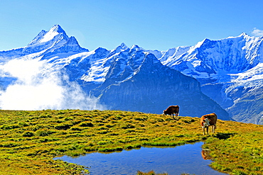 View from First to Bernese Alps, Grindelwald, Bernese Oberland, Canton of Bern, Switzerland, Europe