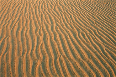 Sand ripples, between Kharga and Dakhla oases, Western Desert, Egypt, North Africa, Africa