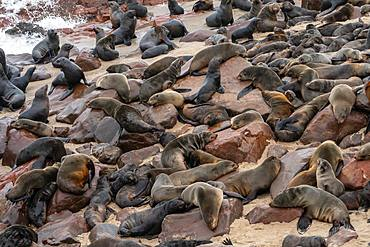 Seals slumber at one of world's largest colonies of Cape Fur Seals (Arctocephalus pusillus), Atlantic Coast, Cape Cross, Namibia, Africa
