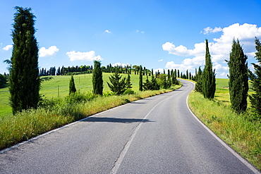 Cypress trees line country road, Chianti Region, Tuscany, Italy, Europe