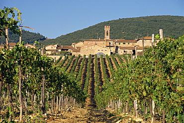 Vineyard in the Chianti Classico region north of Siena, Tuscany, Italy, Europe