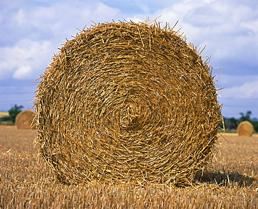 Close-up of a circular straw bale in a field in Nottinghamshire, England, United Kingdom, Europe