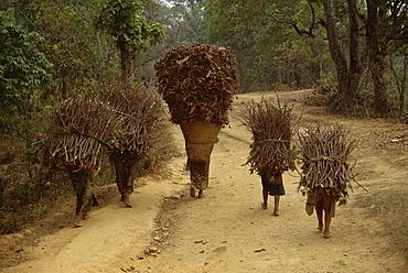 Women and children walking on a country road, carrying bundles of firewood, Chautara, north of Kathmandu, Nepal, Asia