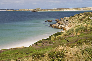 Gypsy Cove, Yorke Bay, Port Stanley, Falkland Islands, South America