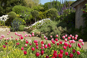 Abbey Gardens, Tresco, Isles of Scilly, United Kingdom, Europe