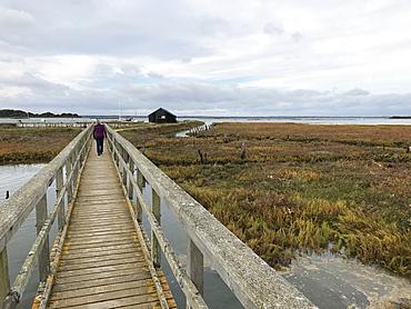 Newtown Nature Reserve, Isle of Wight, England, United Kingdom, Europe